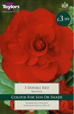 3 BEGONIA DOUBLE RED