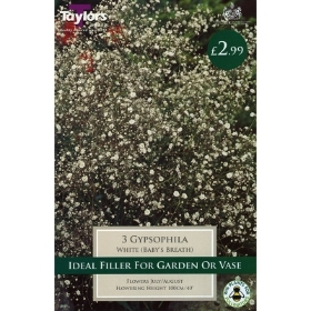3 GYPSOPHILA WHITE
