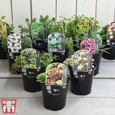 MIXED ALPINES   OFFERS AVAILABLE