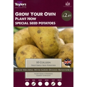 TAYLORS COLLEEN X10 SPECIAL SEED POTATOES